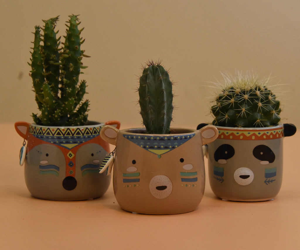 Pot and Cactus Set