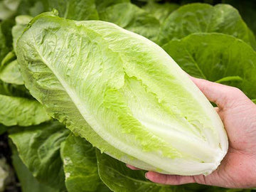 Romaine lettuce, 1 head