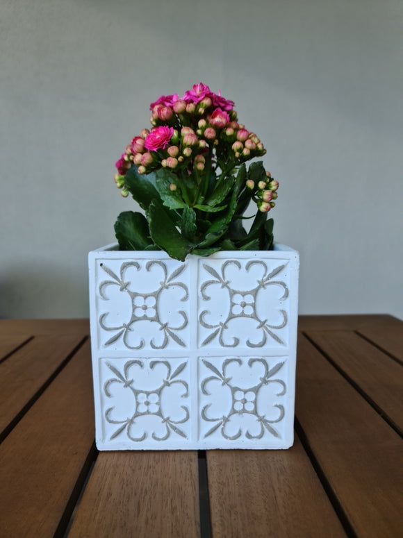 White Square Plant Pot