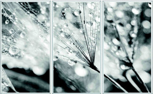 Dandelion with Droplets - Acrylic Wall Art - Silver Frame