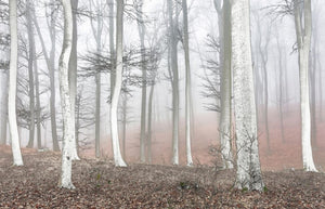 Canvas Misty Trees Wall Art