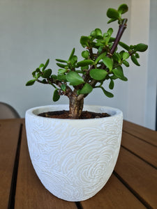 White Pot with Rose Design