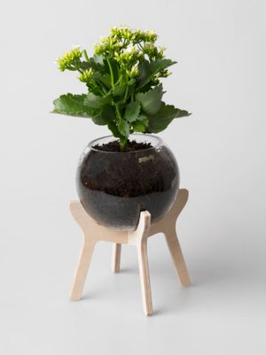 Pot Plant Holder (Glass Bowl Included)