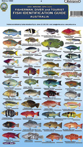 Fish ID Cards - Australia and Great Barrier Reef