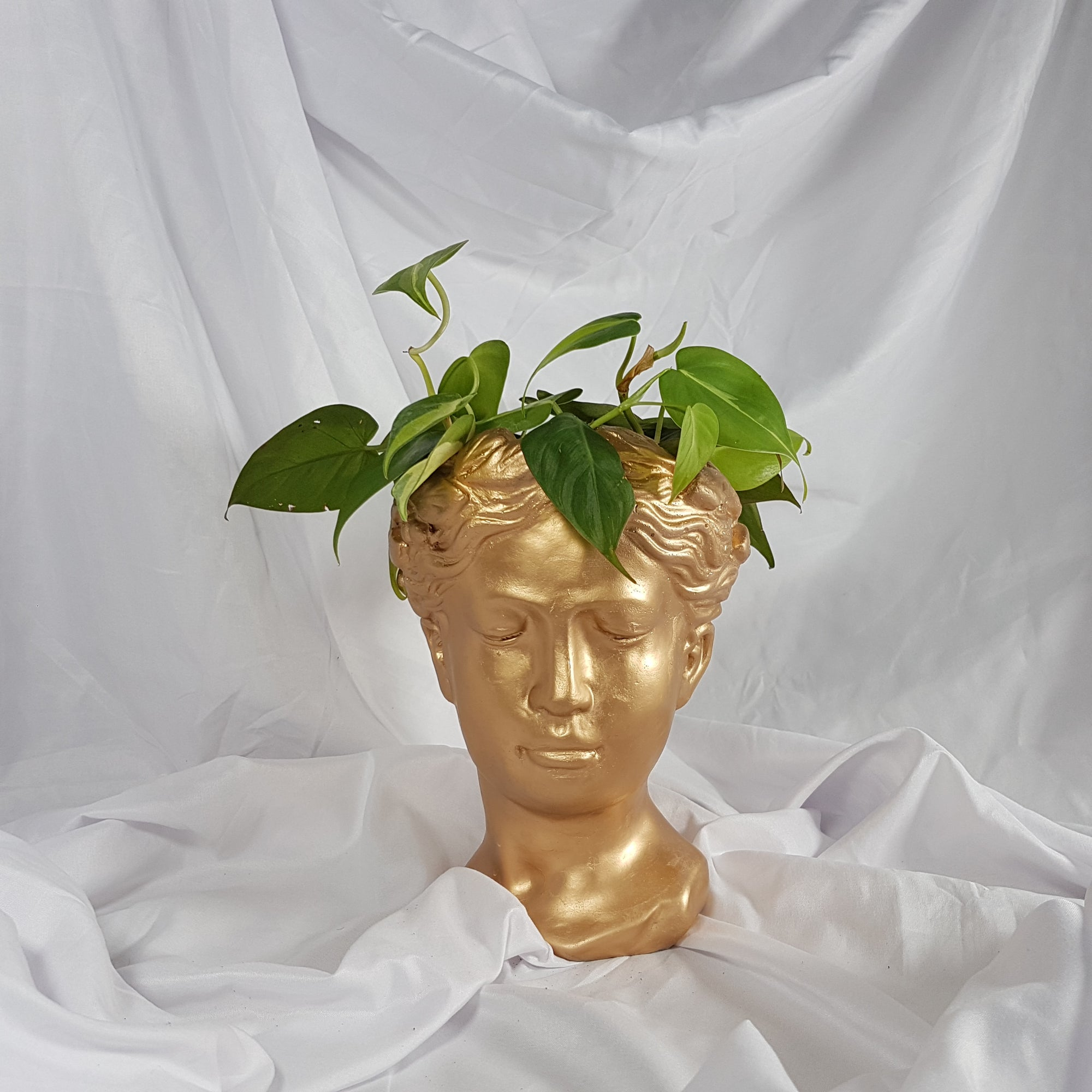 Venus Gold + Philodendron Mix