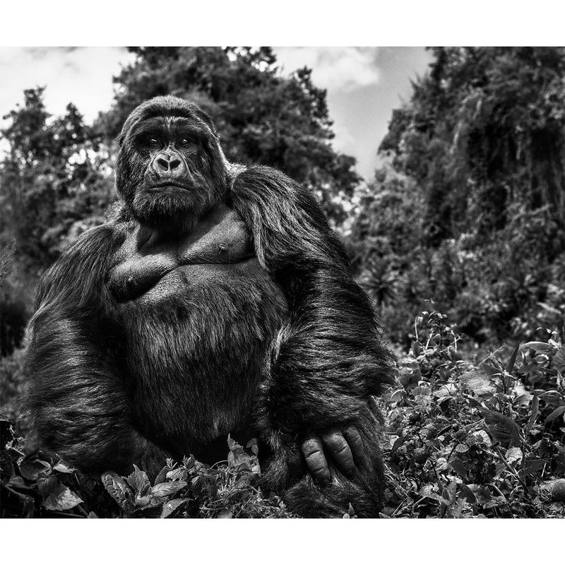 Judge and Jury - David Yarrow - Art For Heroes