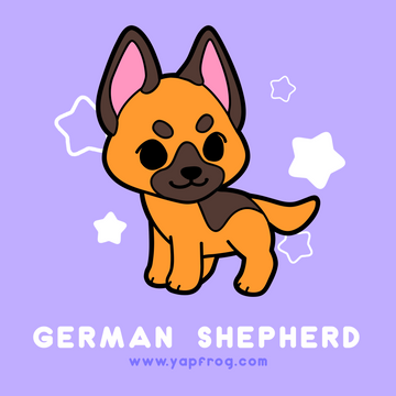 B grade #003 German Shepherd [AUGUST 2020]