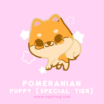 B grade #004-P Pomeranian Puppy [SEPTEMBER 2020]