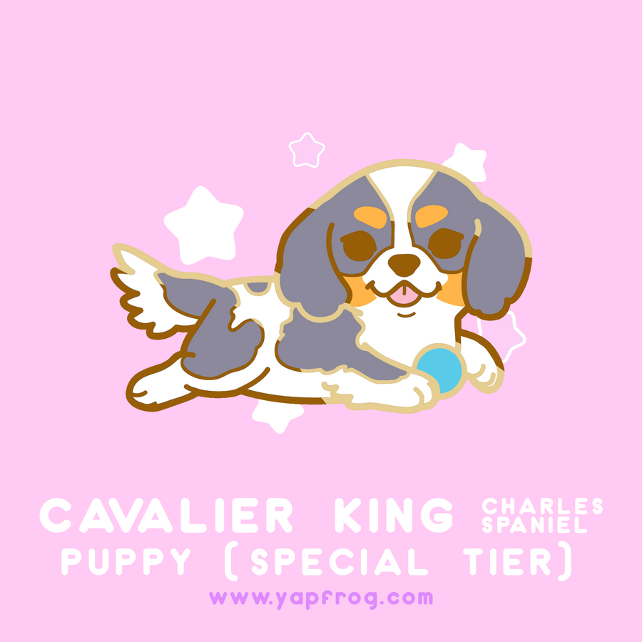 B grade #007-P Cavalier King Charles Spaniel Puppy [JANUARY 2021]