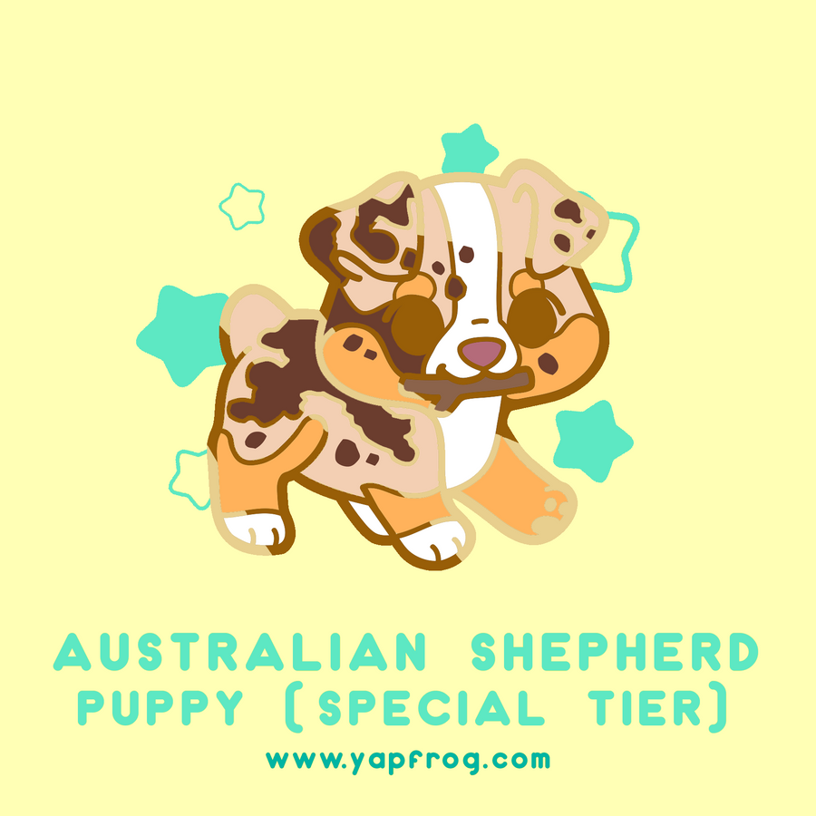B grade #005-P Australian Shepherd Puppy [OCTOBER 2020]