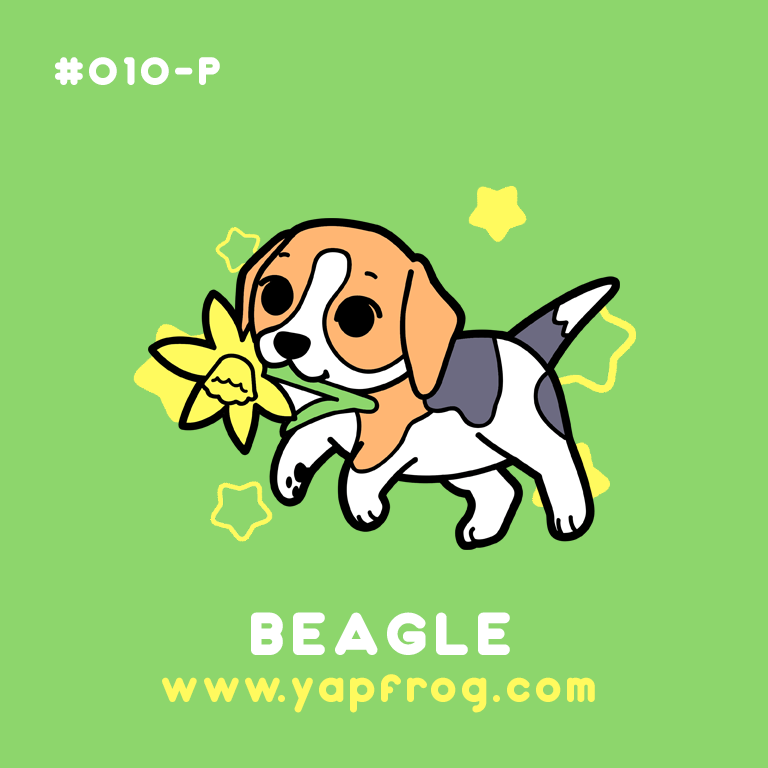 B grade #010-P Beagle Puppy [APRIL 2021]