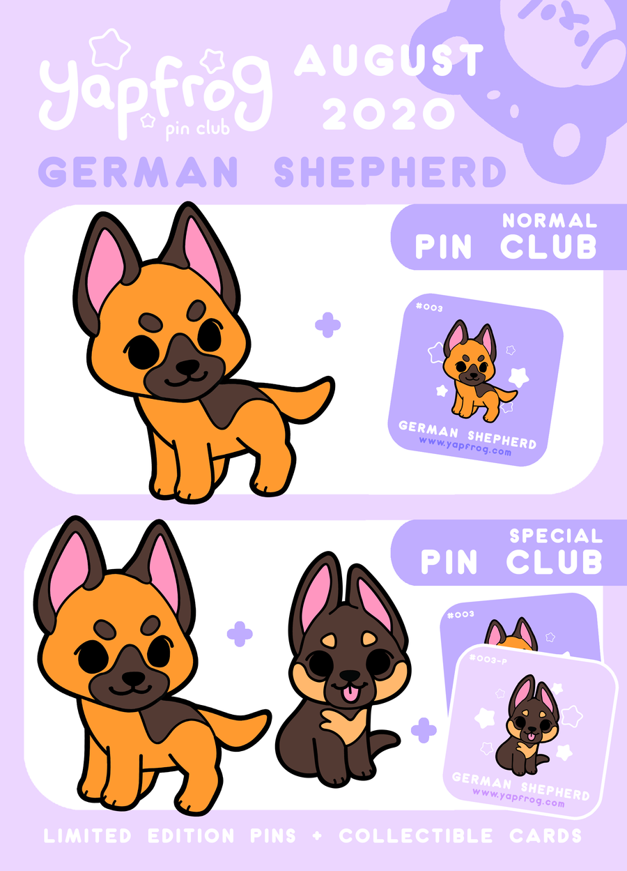 B grade #003-P German Shepherd Puppy [AUGUST 2020]