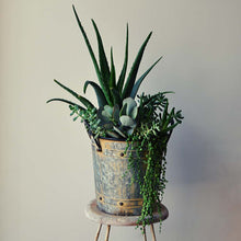 Load image into Gallery viewer, Succulent French Pail