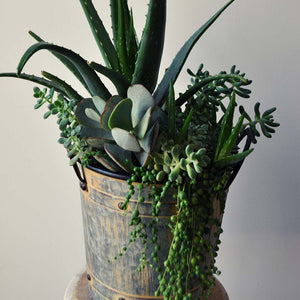 Succulent French Pail
