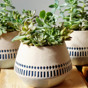 Succulent Ceramic Planter