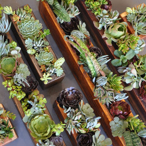 Long succulent planter box