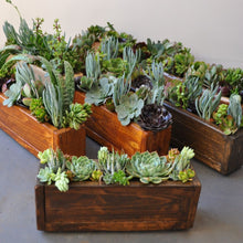 Load image into Gallery viewer, Long succulent planter box
