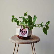 Load image into Gallery viewer, Peperomia Scandens