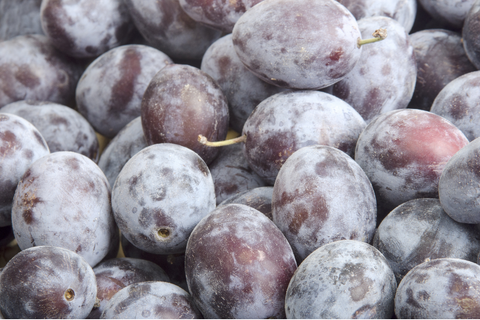 Italian Plums recipes for tarts and tortes