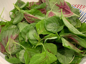 Sundial Farm Red Spinach 紅莧菜 (1 bunch)