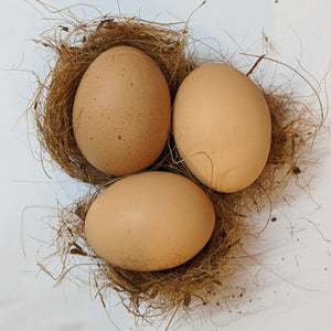 Egg (1 Dz) Local Ramona Free Range - Brown or White