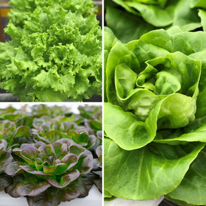 Sundial Farm Greens (6 Heads)