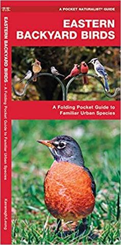 Eastern Backyard Birds: A Folding Pocket Guide to Familiar Urban Species (Wildlife and Nature Identification)