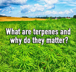 What are terpenes and why do they matter?