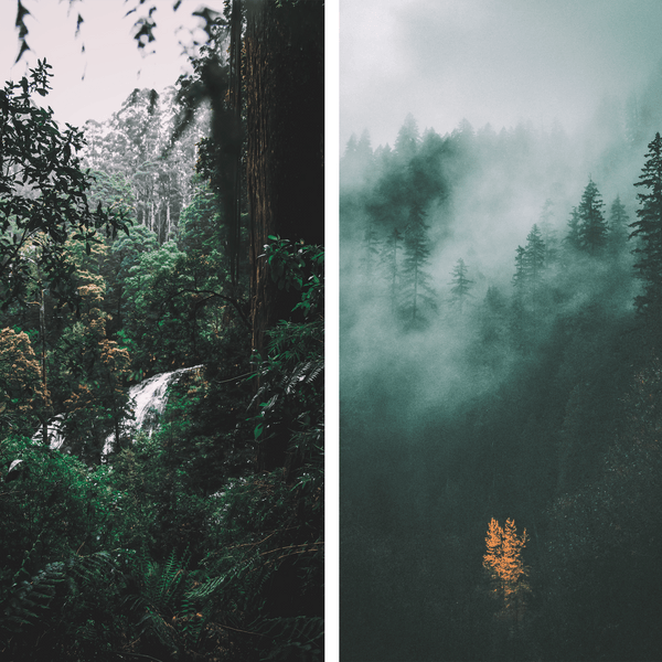 MOODY NATURE COLLECTION