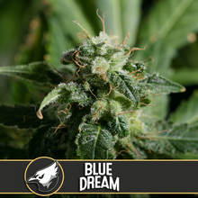 Load image into Gallery viewer, BLUE DREAM
