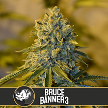 Load image into Gallery viewer, BRUCE BANNER #3