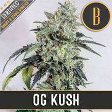Load image into Gallery viewer, OG KUSH