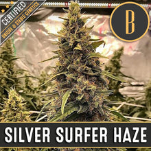 Load image into Gallery viewer, SILVER SURFER HAZE