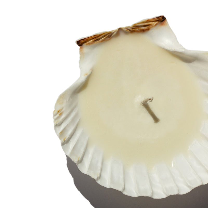 Sanctuaire-bumcake-hand-made-seashell-candle
