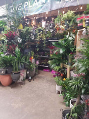 """The Plant Store"" at Adams Morgan Ace"