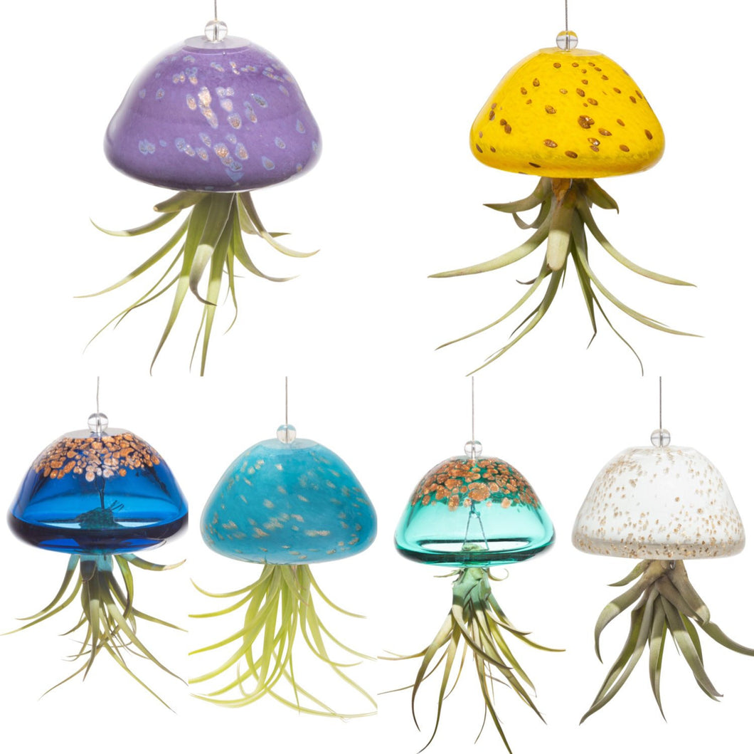 Glass Airplant Jellyfish Planter