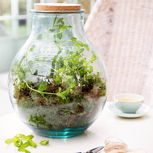 Oblong Glass Terrarium w/ Cork Lid