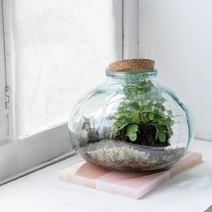 Glass Terrarium w/ Cork Lid