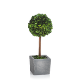Versailles Ball Topiary in Square Pot