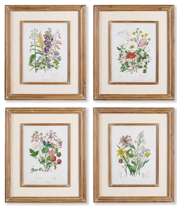 Garden Botanical Study Framed Prints
