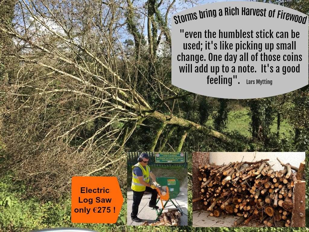 Storm Ophelia brings a rich harvest of firewood