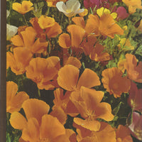 TIME-LIFE: The Encyclopedia of Gardening-Annuals