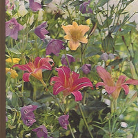 TIME-LIFE: The Encyclopedia of Gardening-Perennials