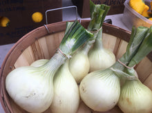 Load image into Gallery viewer, Michelle's Market Calgary, Walla Walla White Onions - Order online