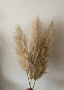 Natural cream/brown pampas