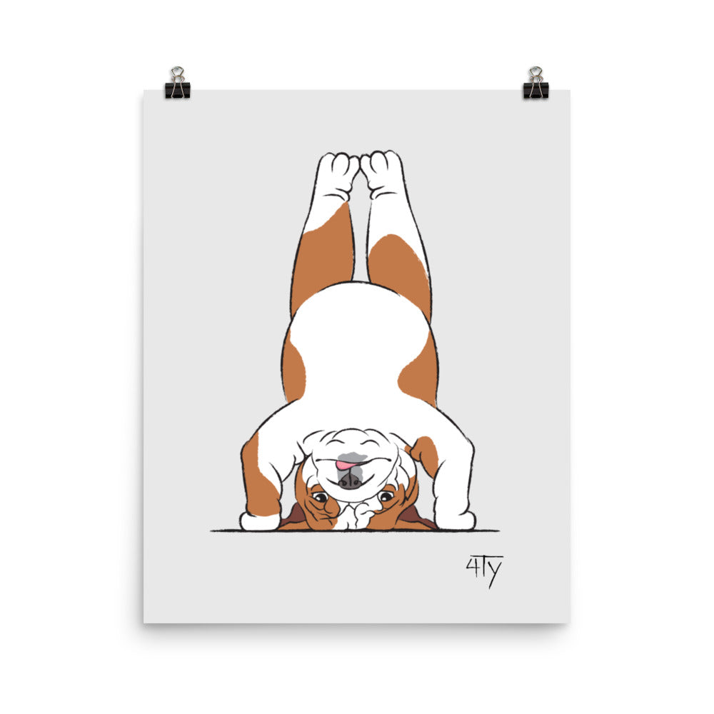 Poster, English Bulldog Yogi, Head Stand Pose, Color