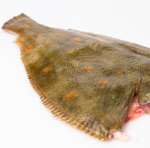 4.54kg Plaice Fillets Moorcroft Seafood Home Delivery