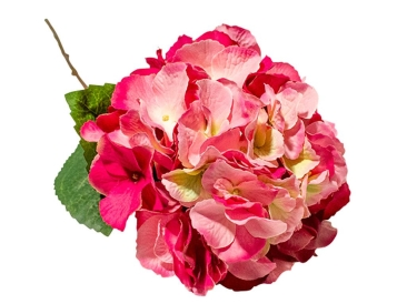 Hydrangea Pink - Simply Special Invercargill