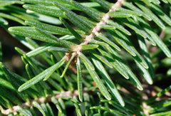 BALSAM FIR HOLIDAY HOME PERFUME OIL