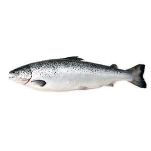 Fresh Farmed Atlantic Whole Salmon - 14-16 lbs